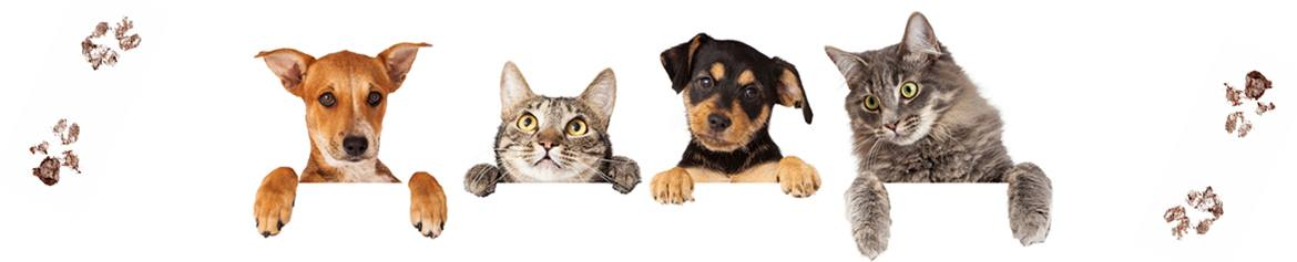 Shop and Save on Pets